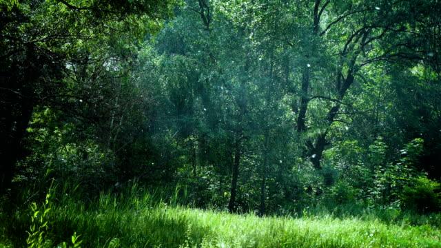 vídeos de stock e filmes b-roll de blooming popplar trees - flower white background