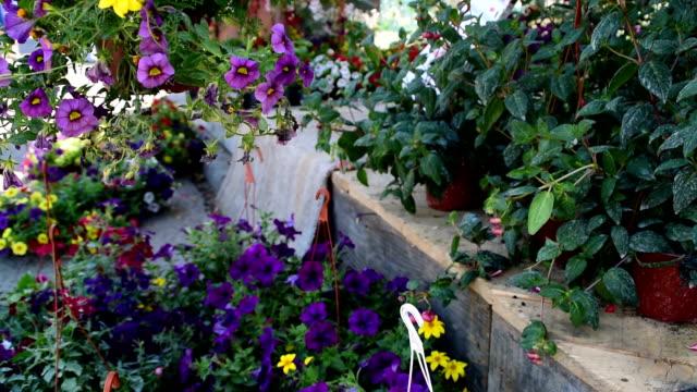 地面にぶら下がったポットとペチュニアに紫色のペチュニアを咲かせる - 花壇点の映像素材/bロール