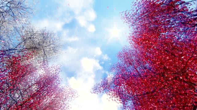 Blooming sakura falling petals against sunny sky video