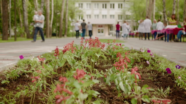Blossom Flowerbed City Park People Group Talk - vídeo
