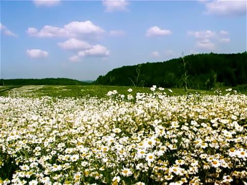 Blossom video