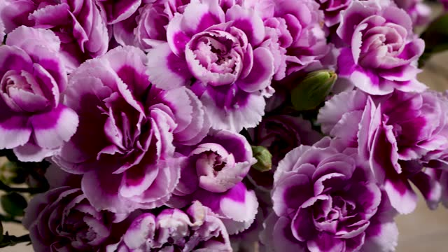 Blossom White Purple Carnation Flowers Bouquet Blossom White Purple Carnation Flowers Bouquet. Love for Mother's Day Concept mothers day stock videos & royalty-free footage