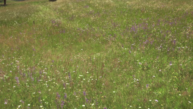 AERIAL Blossoming spring meadow video