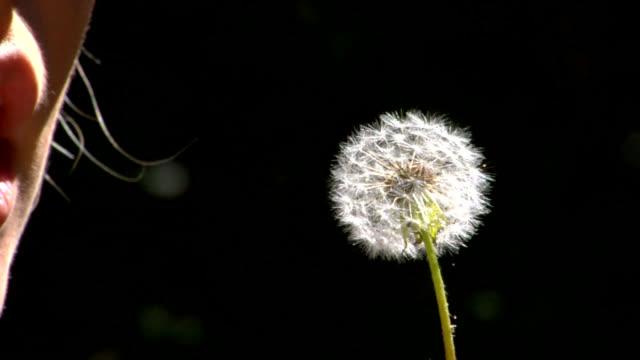 Blow Dandelion Slow Motion video