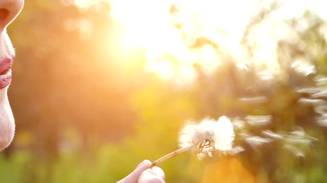 Blowing Dandelion In Nature In Slow Motion video