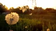 istock Blowing on a Dandelion 803906238