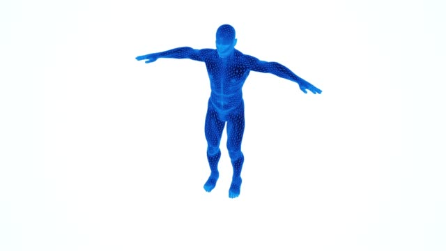blue 3d human anatomical model rotating blue 3d human anatomical model rotating physiology stock videos & royalty-free footage