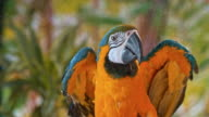 istock Blue and yellow macaw flying off a branch 993167792
