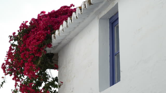 Blue andalusian window of a house Blue andalusian window of a house wrought iron stock videos & royalty-free footage