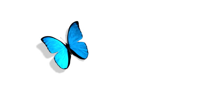 Blue Butterfly Flying on a Green Backgroundll HD