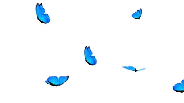 blue butterfly group - butterfly stock videos and b-roll footage