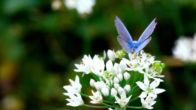 farfalla blu. - farfalla ramo video stock e b–roll