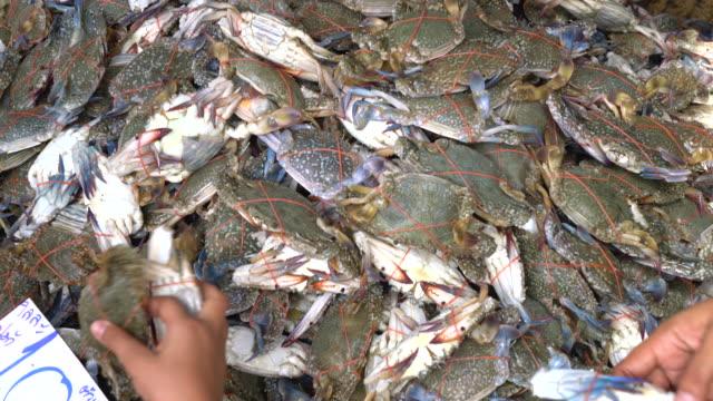 crabe bleu du marché - Vidéo