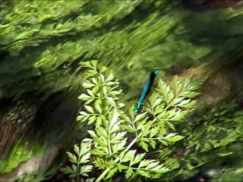 libellula fiore blu in impianti - parte della pianta video stock e b–roll