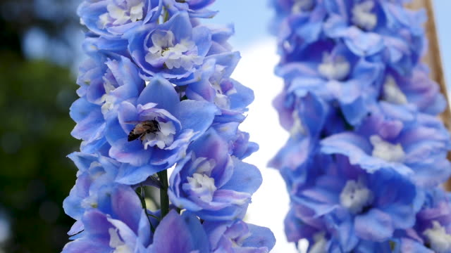 alan salıncakta mavi çiçek - full hd format stok videoları ve detay görüntü çekimi