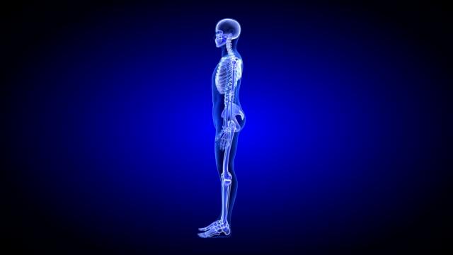 Blue Human Anatomy Body 3D Scan render - rotating seamless loop video