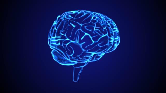 vídeos de stock e filmes b-roll de blue human brain - cérebro humano