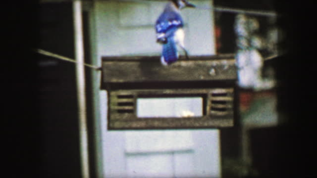 1959: Blue jay bird closeup slow motion feeder habitat house hanging wildlife. video