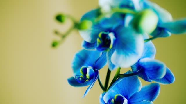 Blue Orchid Plant video