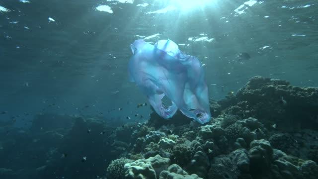 blå plastpåse med fiskar simmar på korallrev bakgrund i sol ljus. plast förorening driver nära fiskstim lunar fusilier (caesio lunaris). plast sopor miljöförorening problem - plastic ocean bildbanksvideor och videomaterial från bakom kulisserna