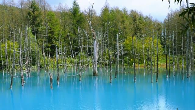 blue pond beauty place in japan. - summer background filmów i materiałów b-roll