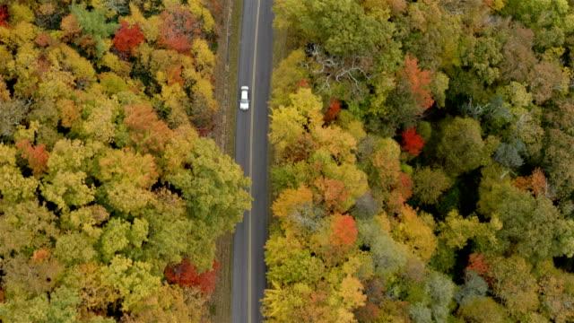 blue ridge parkway in autunno - flora lussureggiante video stock e b–roll