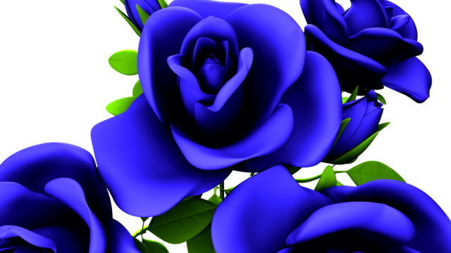 Blue Roses Bouquet On White Background video