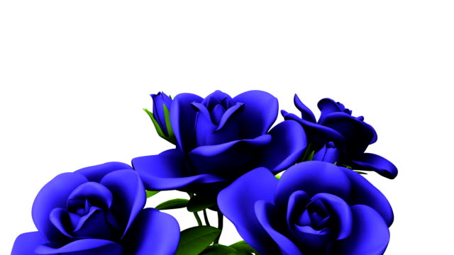 Blue Roses Bouquet On White Text Space video