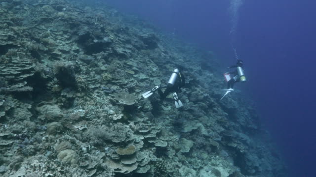 Blue sea, coral reef, underwater video