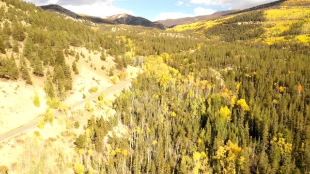 vídeos de stock, filmes e b-roll de céus azuis acima da floresta verde do pinho em colorado - condado de pitkin