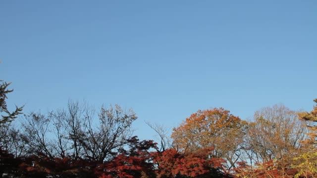 blue sky and bridge - tilt down stock videos & royalty-free footage