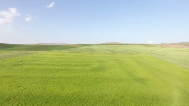 blue sky green grassy land drone aerial view blue sky green grassy land drone aerial view grass area stock videos & royalty-free footage