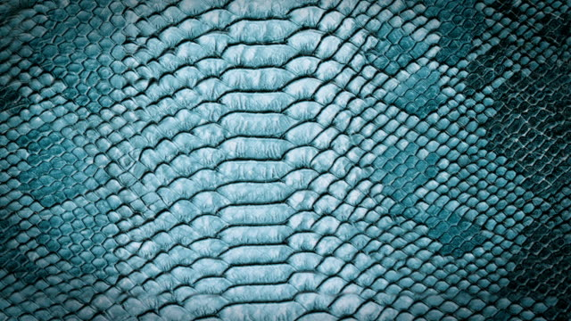 blue snake skin background. close up. - snake stock videos and b-roll footage
