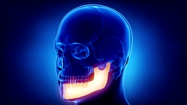 Blue x-ray skull animation - mandible or mandibula 3D anatomy concept animal skeleton stock videos & royalty-free footage