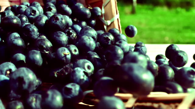 Blueberries are poured out from a basket video
