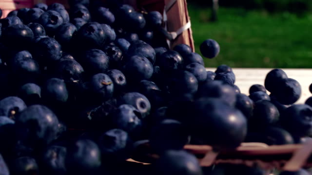 blueberries are poured out from a basket - cestino video stock e b–roll