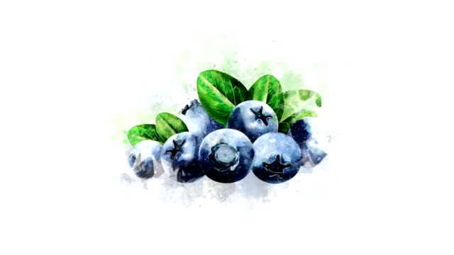 Blueberry illustration animation Animation of blueberries. It is easy to use on any background in video related to cooking, healthy eating and the usefulness of products. watercolor stock videos & royalty-free footage