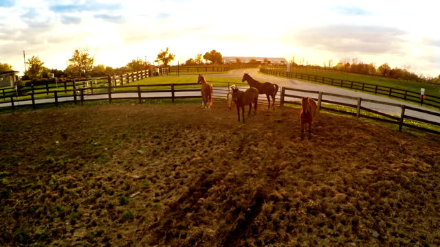 Bluegrass horse farm Aerial footage of horse paddock on a farm in Central Kentucky at sunset paddock stock videos & royalty-free footage