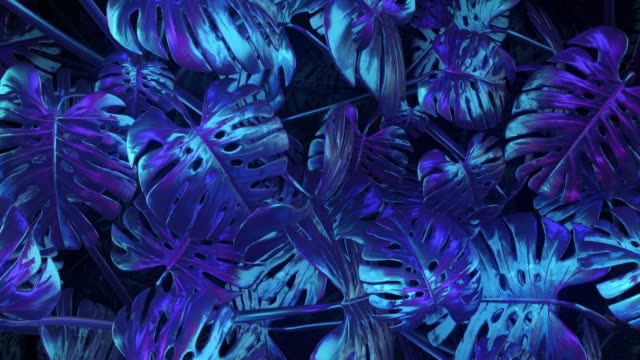 blue-violet abstract plants background - jungle filmów i materiałów b-roll