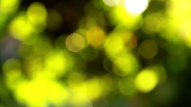Blur green leaves video
