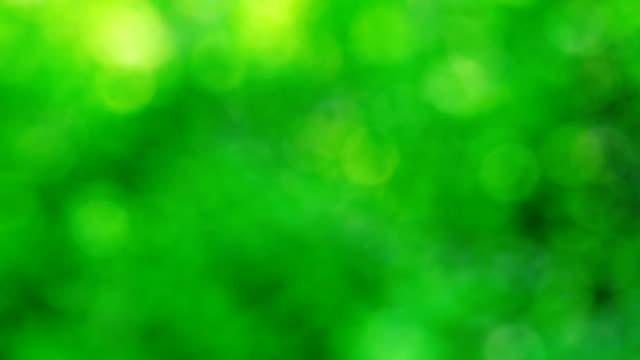vidéos et rushes de flou vert - couleur saturée