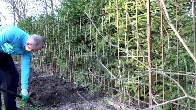 stockvideo's en b-roll-footage met vervagen lila takje toppen en tuinman graven begane grond - shovel