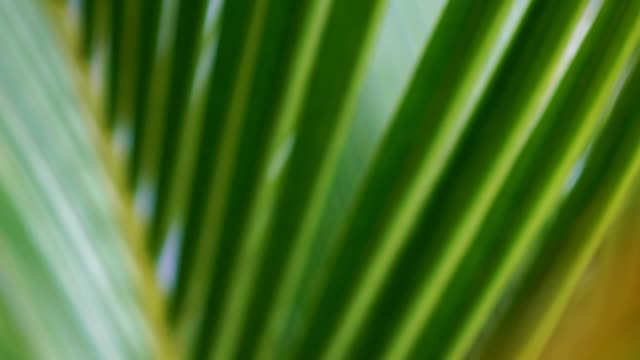 Blur tropical green palm leaf with sun light, abstract natural background.