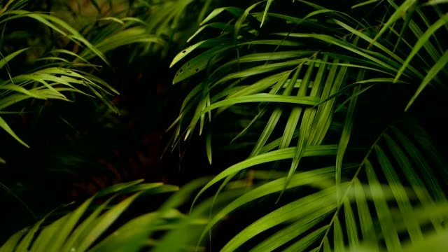 Blur tropical green palm leaf with sun light, abstract natural background with bokeh. Defocused Lush Foliage