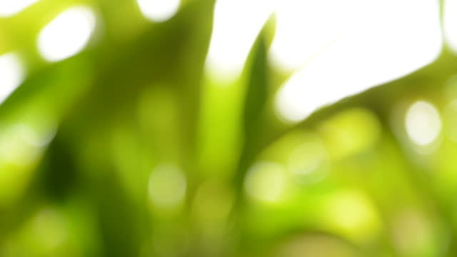 Blurred Background: Abstract Green Nature video