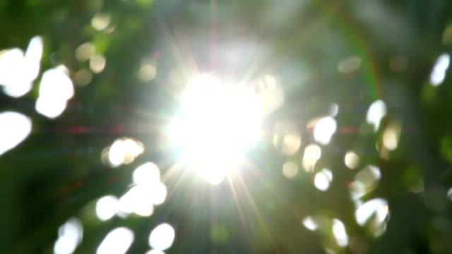 ぼやけている竹の葉が日光、チェンマイ タイ - 木漏れ日点の映像素材/bロール