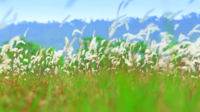 Blurred grass fileld in soft light with mountain in the background video