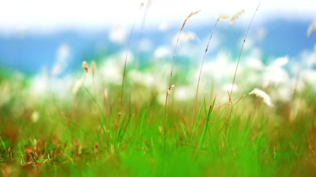 Blurred grass fileld in soft light with mountain in the background, blurred natural background video