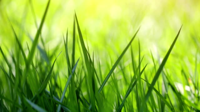 blurred grass - grass stock videos & royalty-free footage