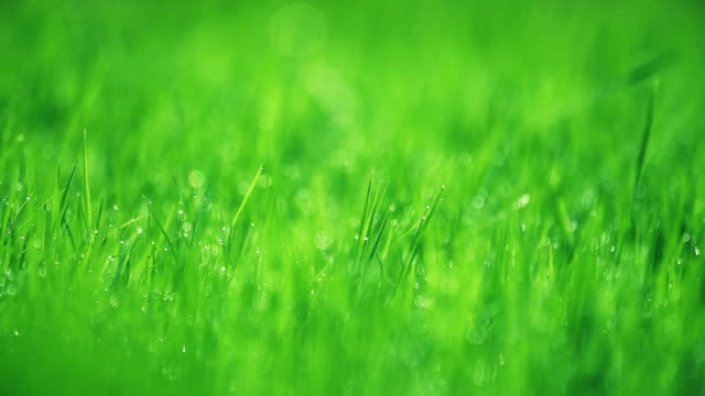 Blurred grass with dew drops in spring season. video